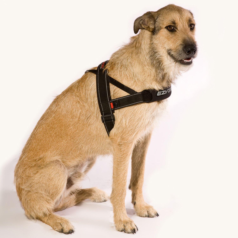 Quickfit Harness Dog Harness Diy Dog Stuff Pet Warehouse