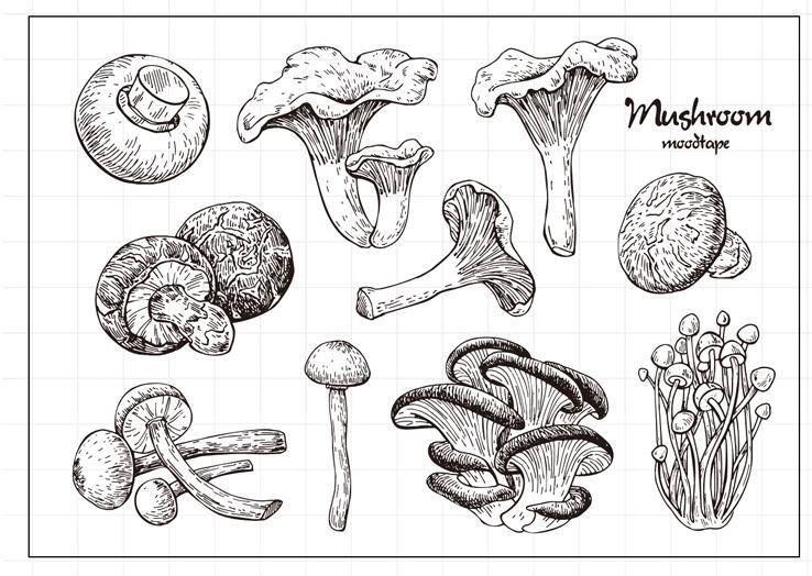 Mushrooms /& Toadstools Rubber Stamp