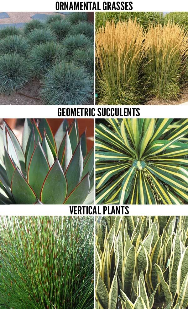 This week we continue our series on drought tolerant for Modern grasses landscaping