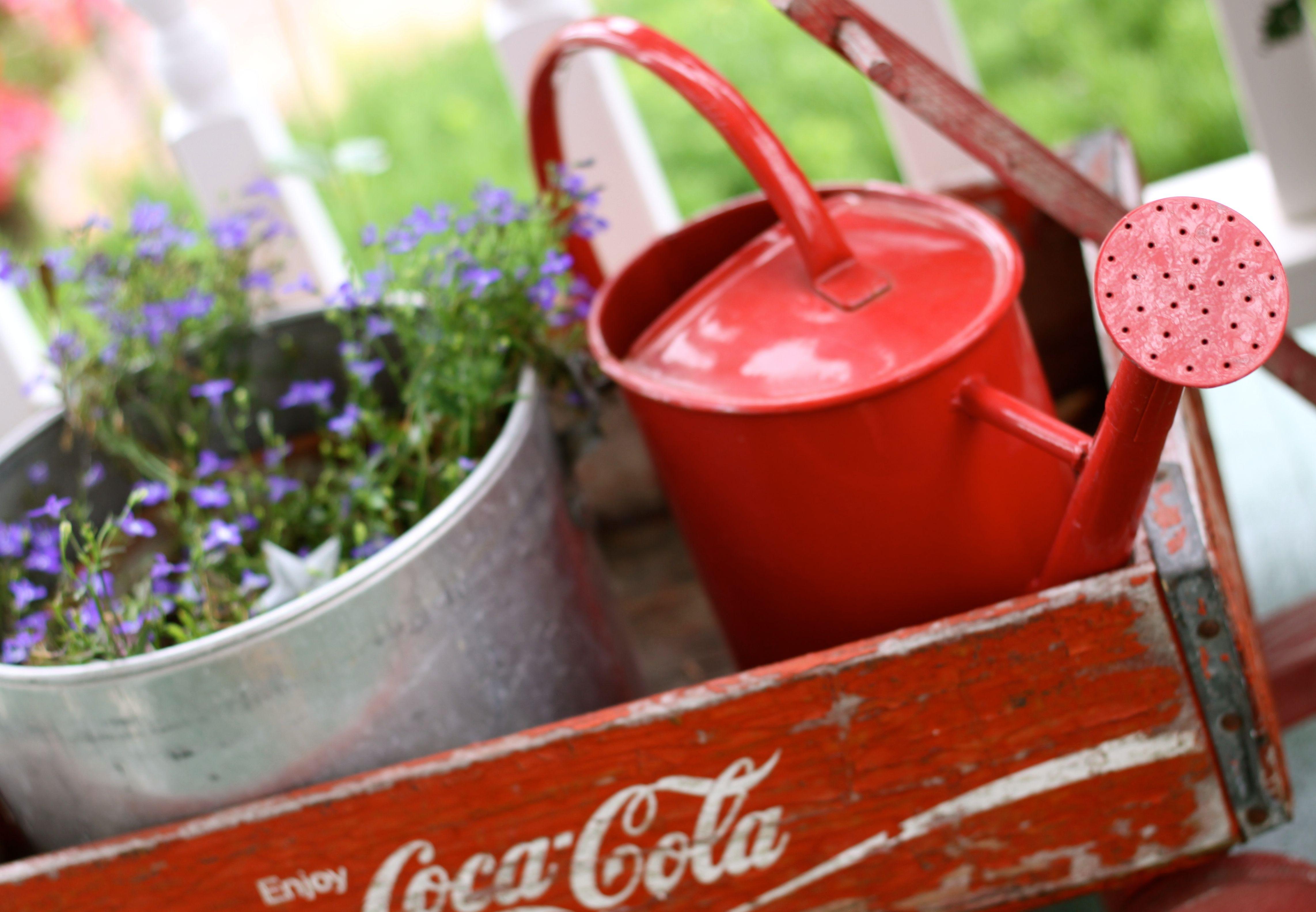 red white and blue flower 4th stylin , @skursh garden