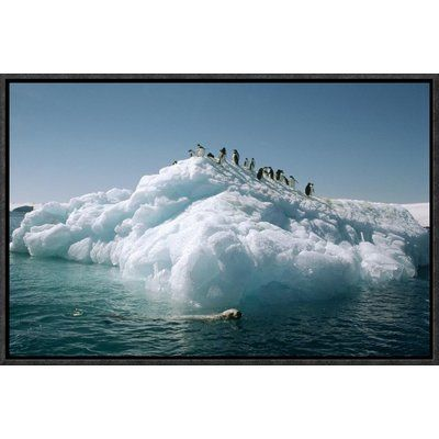 East Urban Home 'Leopard Seal Circles Adelie Penguins on Ice Floe, Hope Bay, Antarctica ' Framed Photographic Print on Canvas Size: