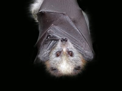 Bats Bats Are Blind Just Can T See The Truth Themselves In