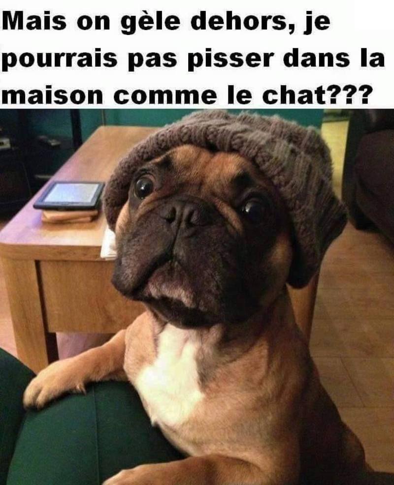 image0011_130.jpg | Chiots bouledogues, Chiot boxer, Chien mignon