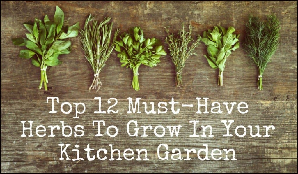 Top 12 Must Have Herbs To Grow In Your Kitchen Garden Kitchen Herbs Kitchen Garden Plants Types Of Herbs