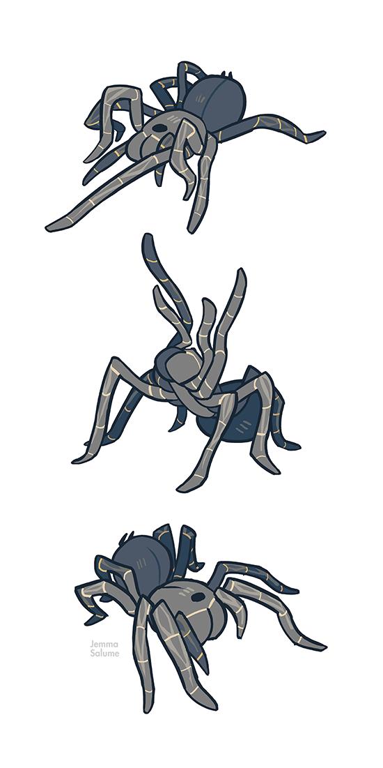 Studies - Tarantula by *oxboxer on deviantART   Animals   Pinterest ...