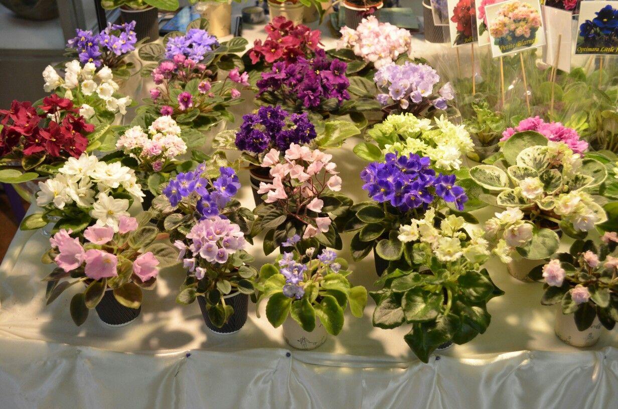 Цветы дарить, интернет магазин цветов фиалок днепропетровск
