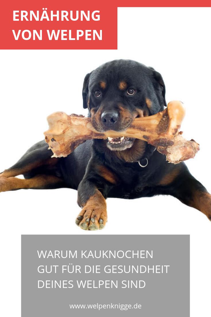 Kauknochen Fur Welpen Hunde Erziehen Kauknochen Welpen