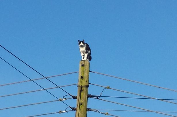 ghostman Betty the pole cat rescued after spending a