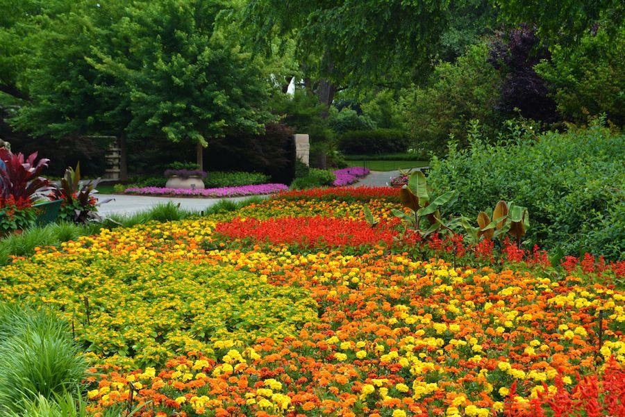 Summer, The Dallas Arboretum, Arboretum, Garden, Blooms