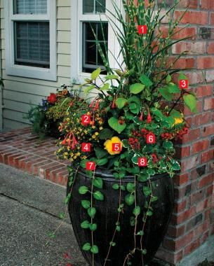 Full color without full sun 1 porcupine grass 2 gartenmeister bonstedt fuchsia 3 stained - Container gardens for sun ...