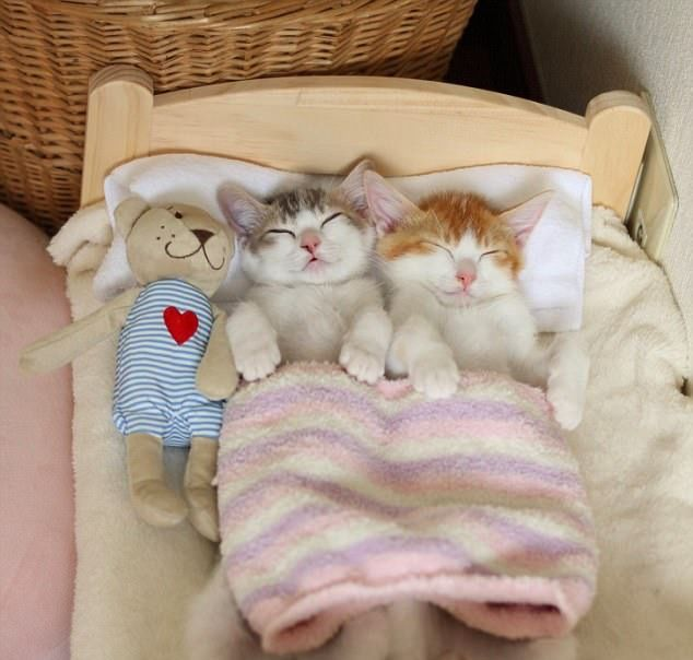 The Two Of Them Can T Get To Sleep Unless They Re Nestling Together Kittens Cutest Kittens Cute Baby Animals