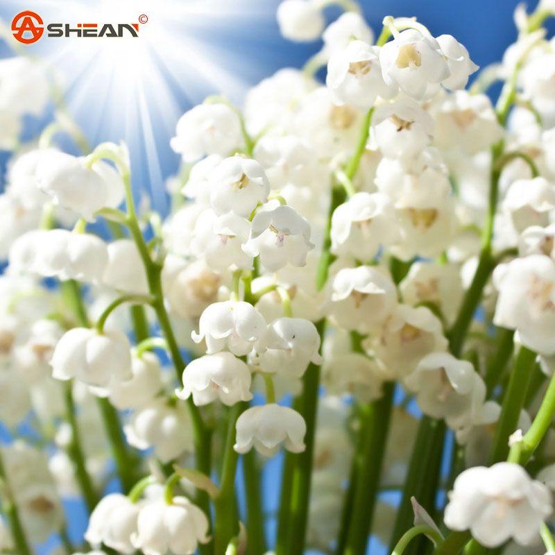 Aliexpress.com: Comprar Lirio blanco of the valle de flores home ...