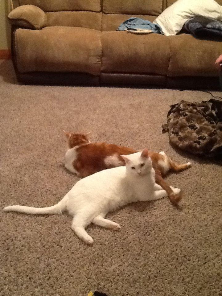 My babies :) Phoenix and Butterscotch