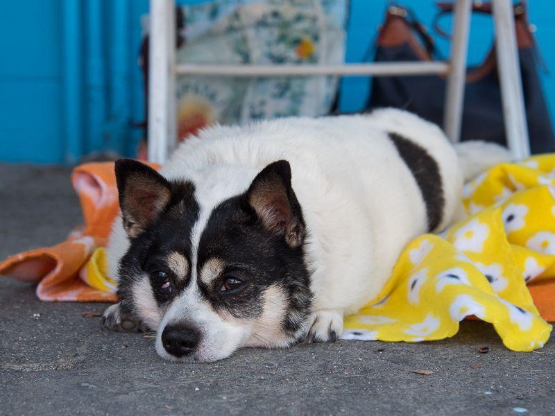 dog for Adoption in Pasadena, CA. ADN561689 on