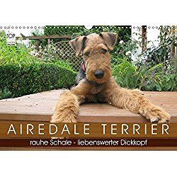 Airedale Terrier Calendar 2018 Airedale Terrier Terrier Cute Dog Pictures