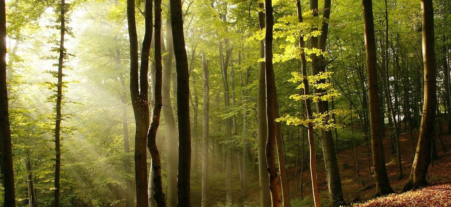 amirthi forest forests in tamil nadu pinterest evergreen and