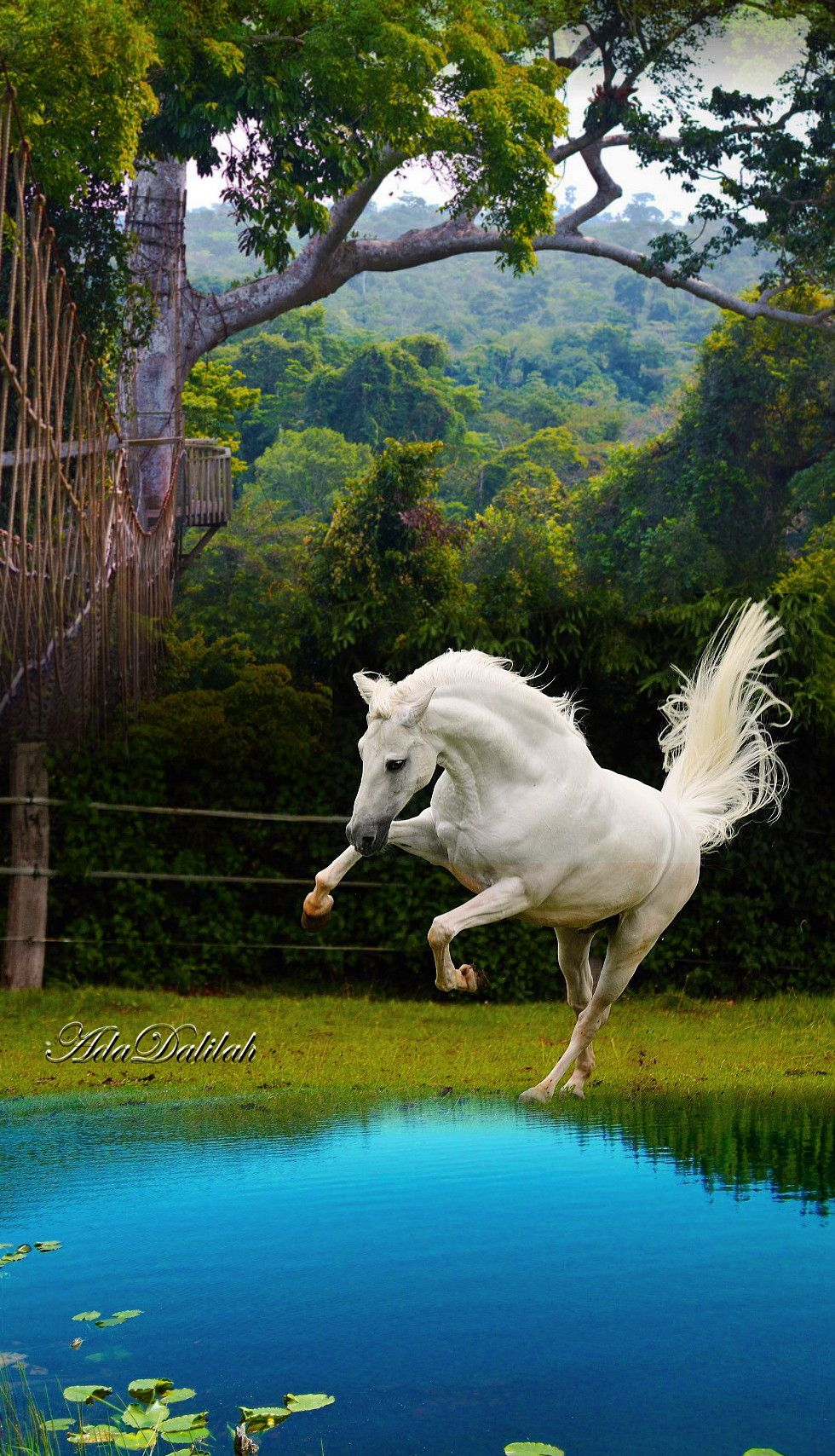 Pin By Ada Dalilah On Horse Art Creative Montage Animals Beautiful Beautiful Horses Horse Pictures