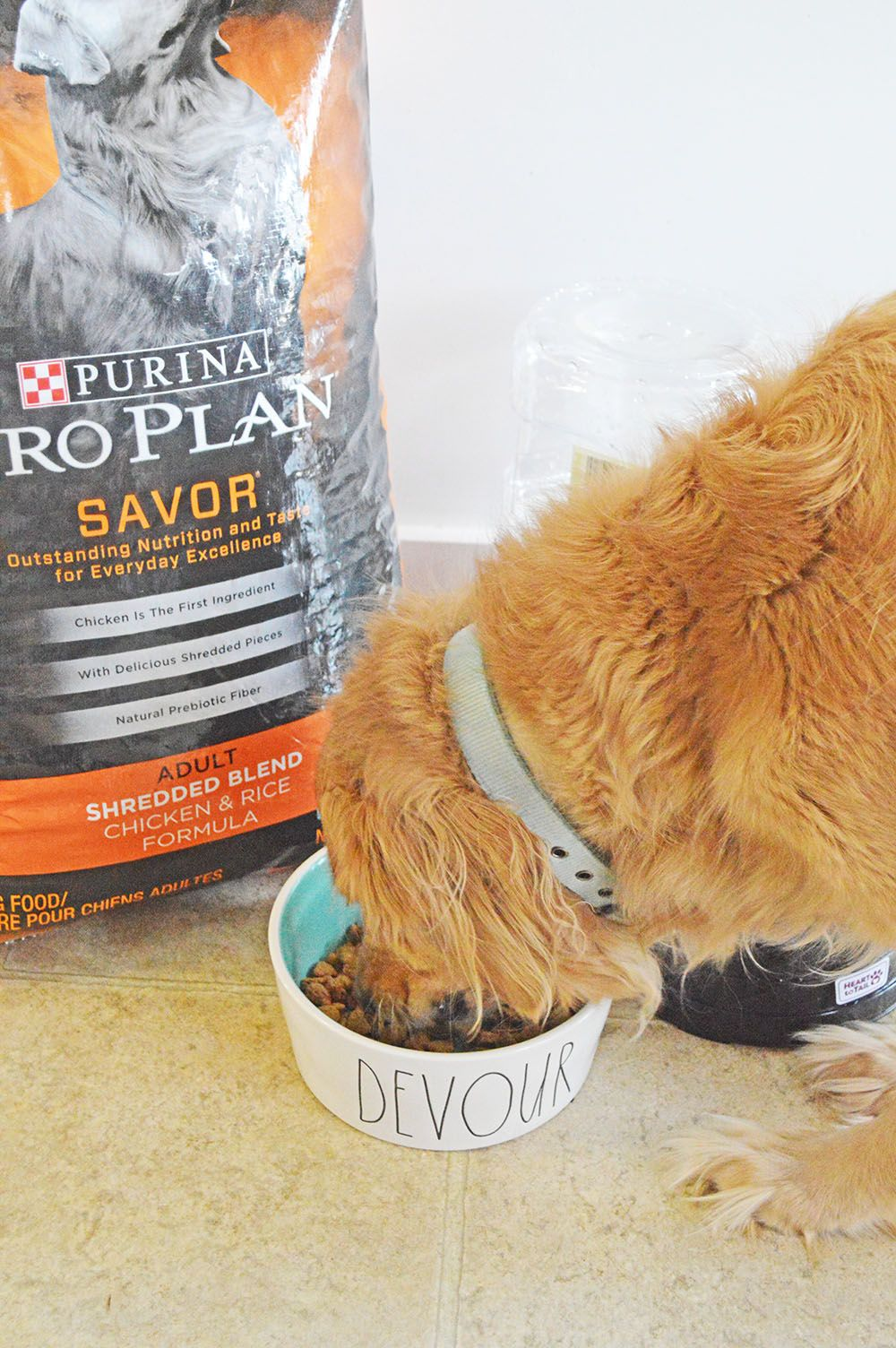 Everyday Little Victories with Purina® Pro Plan | Pets | Dog