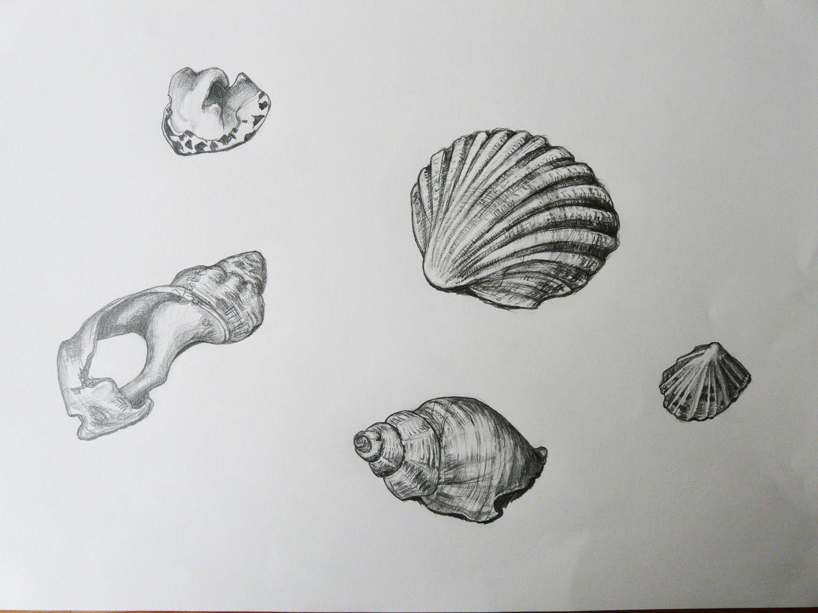 Uncategorized Shell Drawings drawings of shells drawing inspiration pinterest shell shells