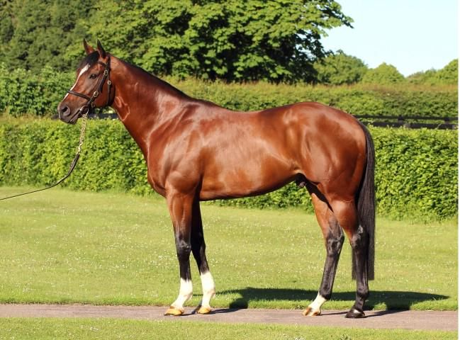 """Says @GaiWaterhouse1 """"Toronado is the perfect specimen; exactly what I look for in a stallion"""" @AlShaqabRacing"""