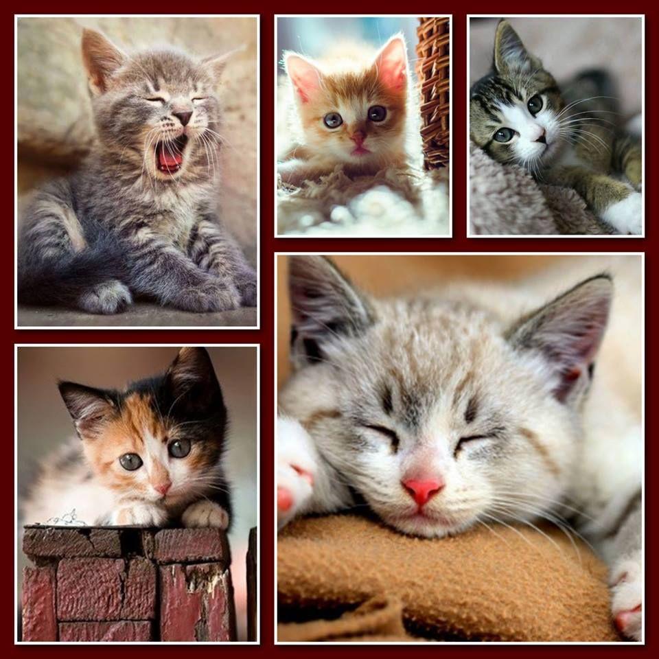 Pin By Thelma Camillo On Sevimli Kediler 3 Cool Cats Beautiful Cats Kittens