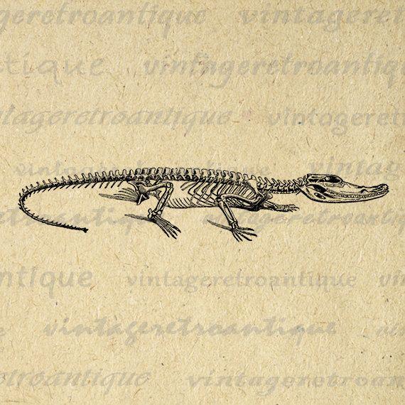 Alligator Skeleton Digital Graphic Download by VintageRetroAntique