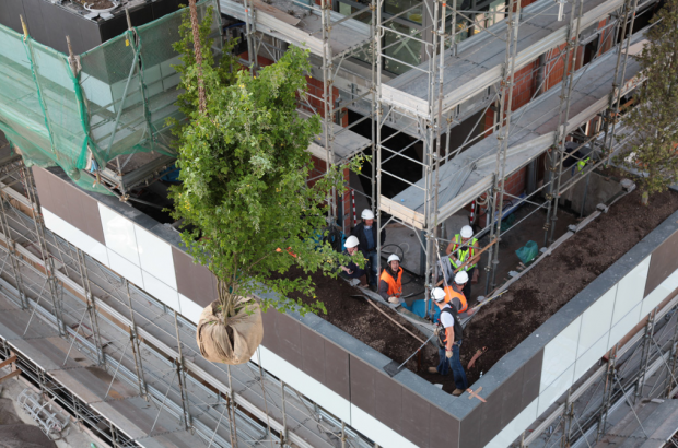 For planting pre-grown trees were selected which correspond to regional climate, light and wind condition. The two buildings are the first o...