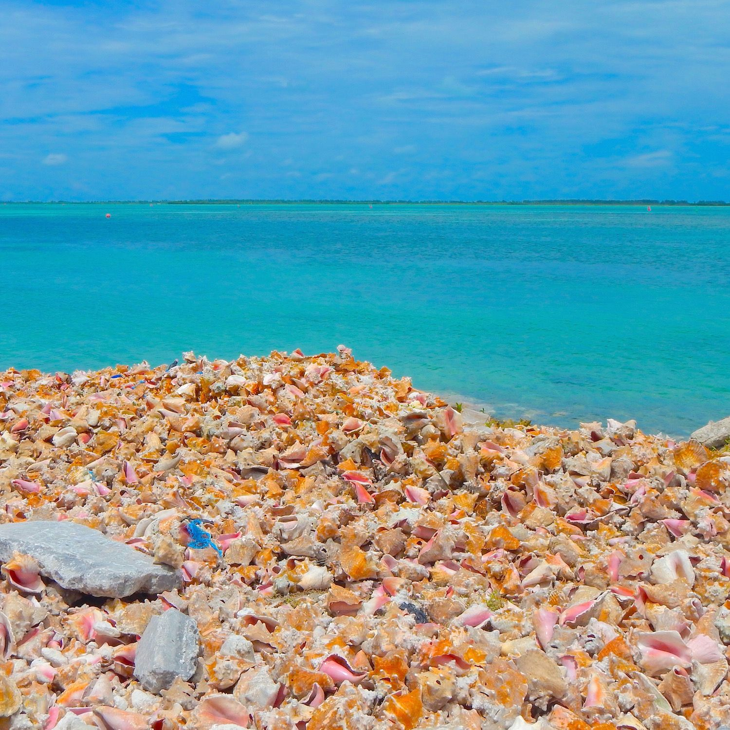 The Beautiful Conchs Of Bimini In The Bahamas. For The