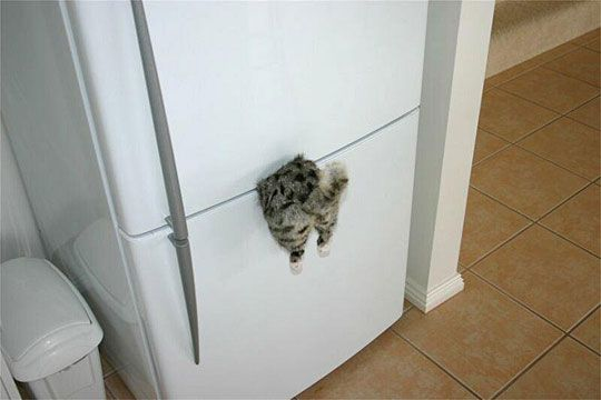 Funny Cat Fails, Funny Cats, Magnets