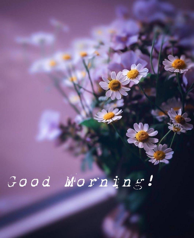 Pin von Lalit Rana auf Morning wishes   Guten morgen, Sprüche
