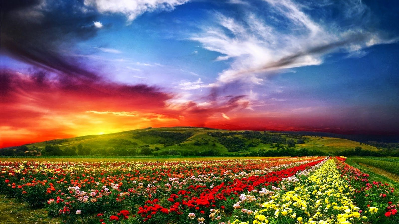 Full Hd Nature Wallpapers Free Download For Laptop Pc Desktop Background Valley Of Flowers Landscape Wallpaper Beautiful Landscapes