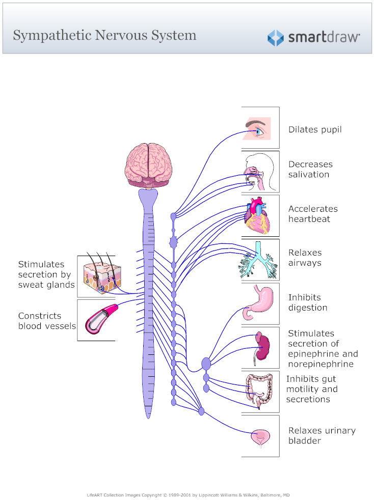 Example image sympathetic nervous system diagram physio pour bts diagram example image sympathetic nervous system diagram ccuart Choice Image
