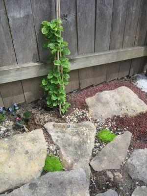 Small Rock Garden Makeover: Vertical Flowering Accents