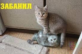 Картинки по запросу фото приколи про котов | Смішні ...