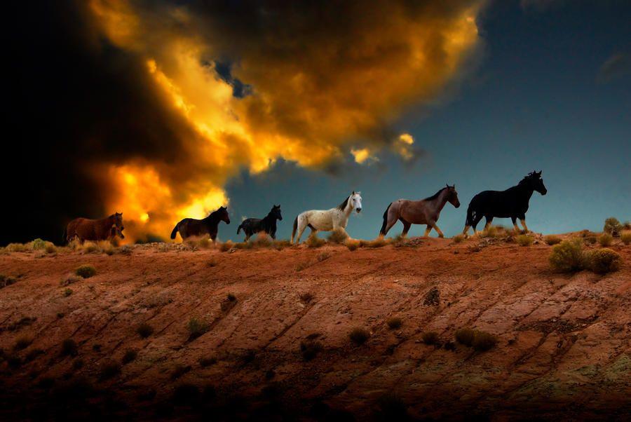 Wild Horses At Sunset