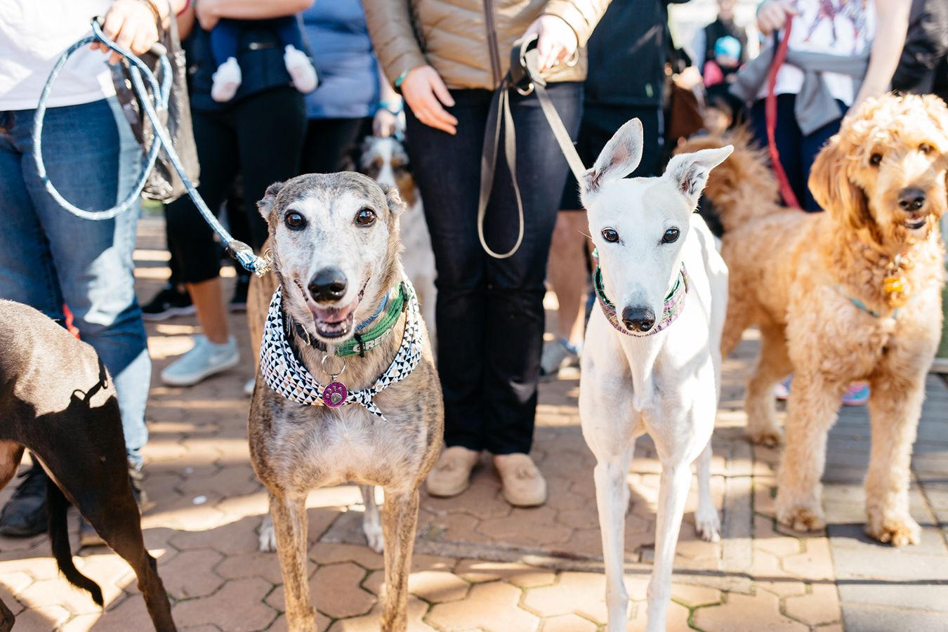Rspca Million Paws Walk 2019 May 19 Australian Dog Lover Dogs Day Out Australia Animals Fight Animal Cruelty