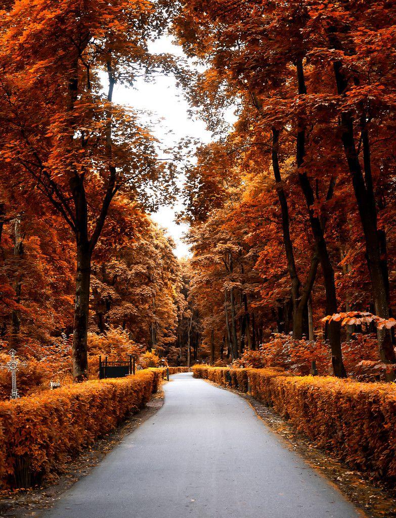 P8280464 Autumn Scenery Autumn Aesthetic Autumn Photography