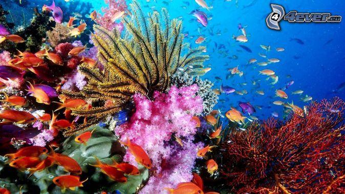 Mer De Corail Poisson Image Fond D Ecran Corail Recif Corallien