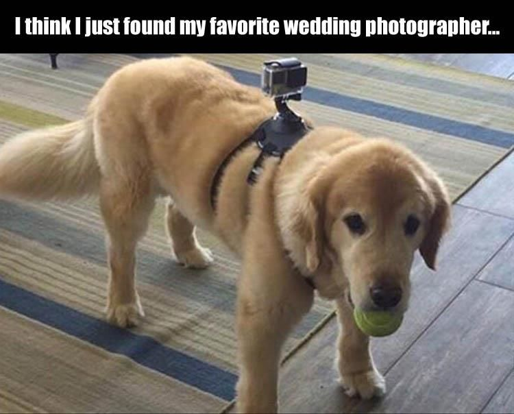 76067899ea67456c08a6be265c70a632 funny pictures of the day 38 pics funny pictures, wedding