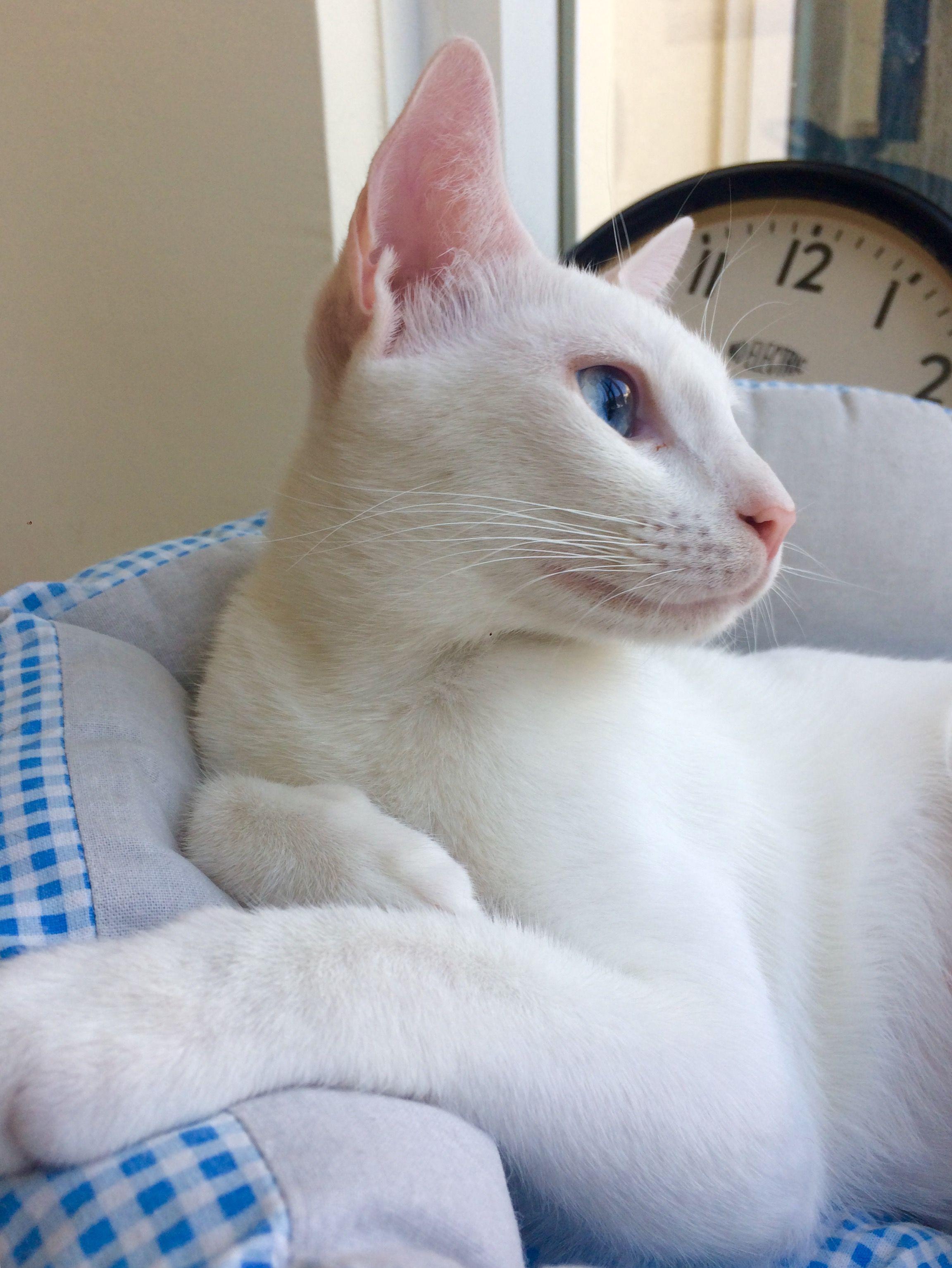 Maya Al Maya Available For Adoption Animal Rescue Animals Fur