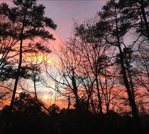 Pin von Melanie Camp auf WBRC fox 6 | Fox 6, Sun und Sunset