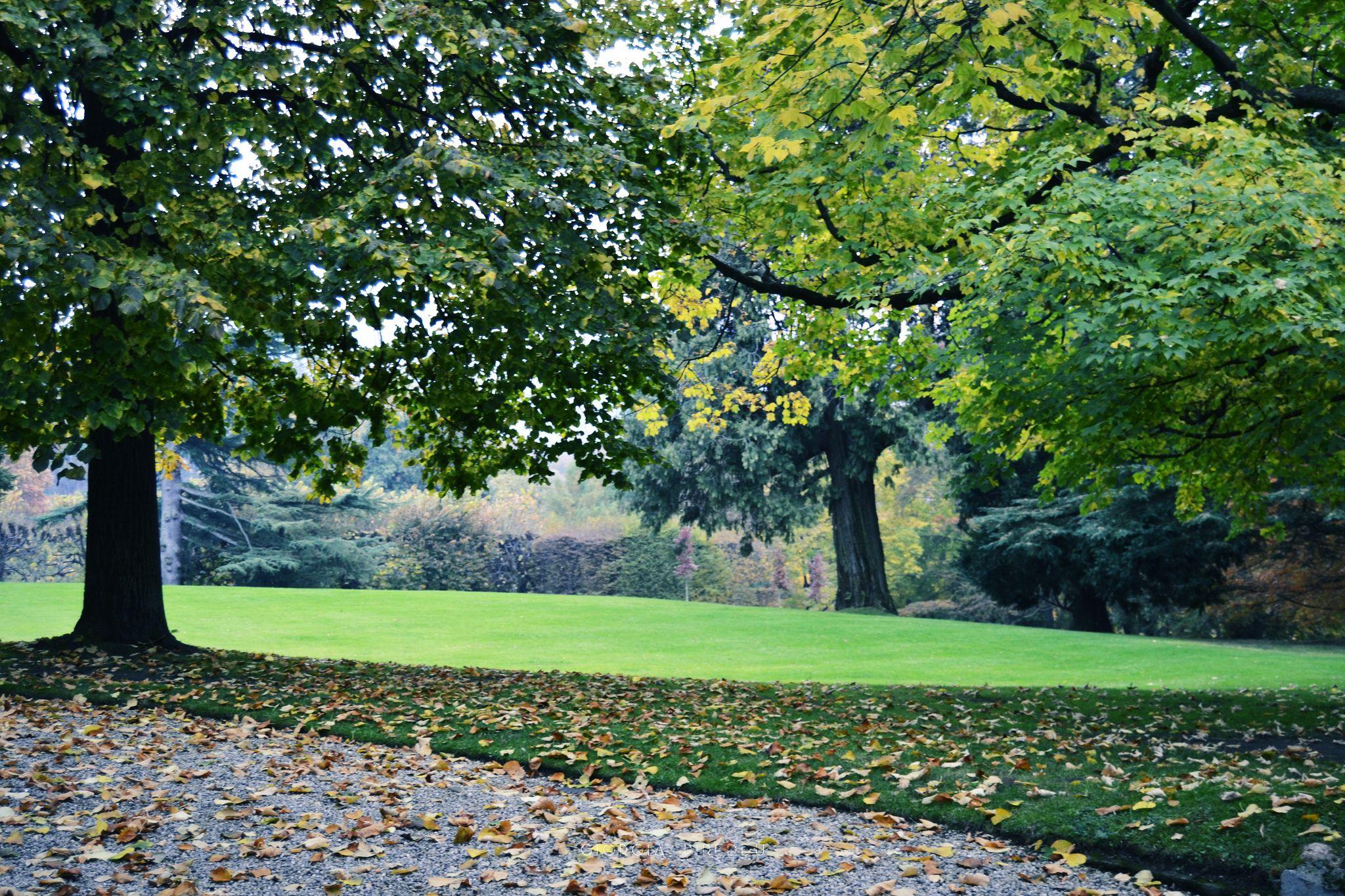 Villa Agnelli | Flickr - Photo Sharing! #green #verde #alberi #tree #villaagnelli #villarperosa