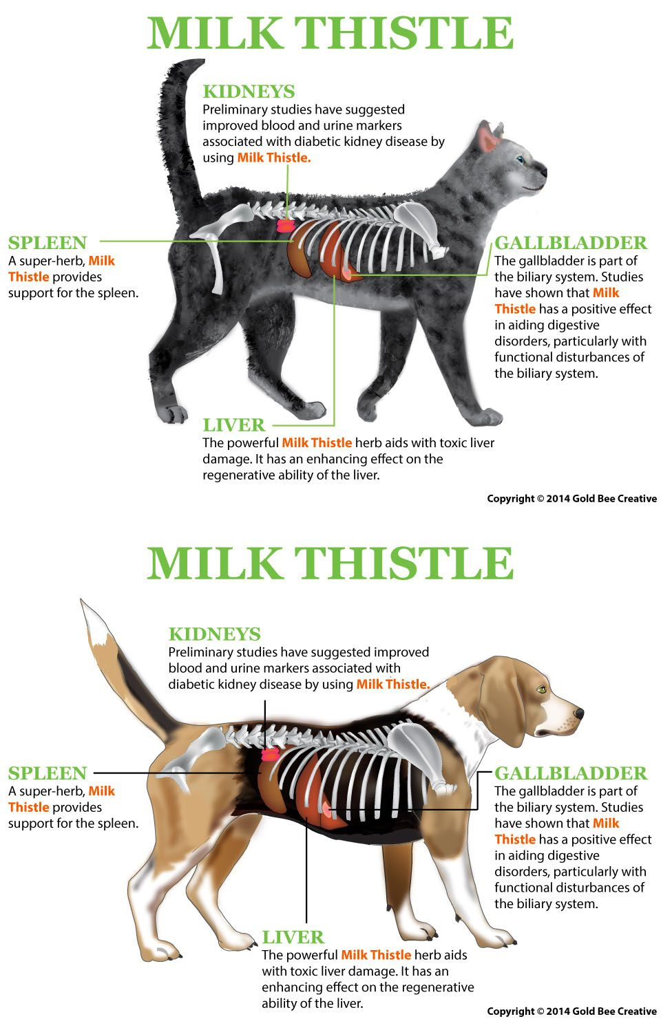 milk thistle for dogs holistic remedies for pets dogs. Black Bedroom Furniture Sets. Home Design Ideas