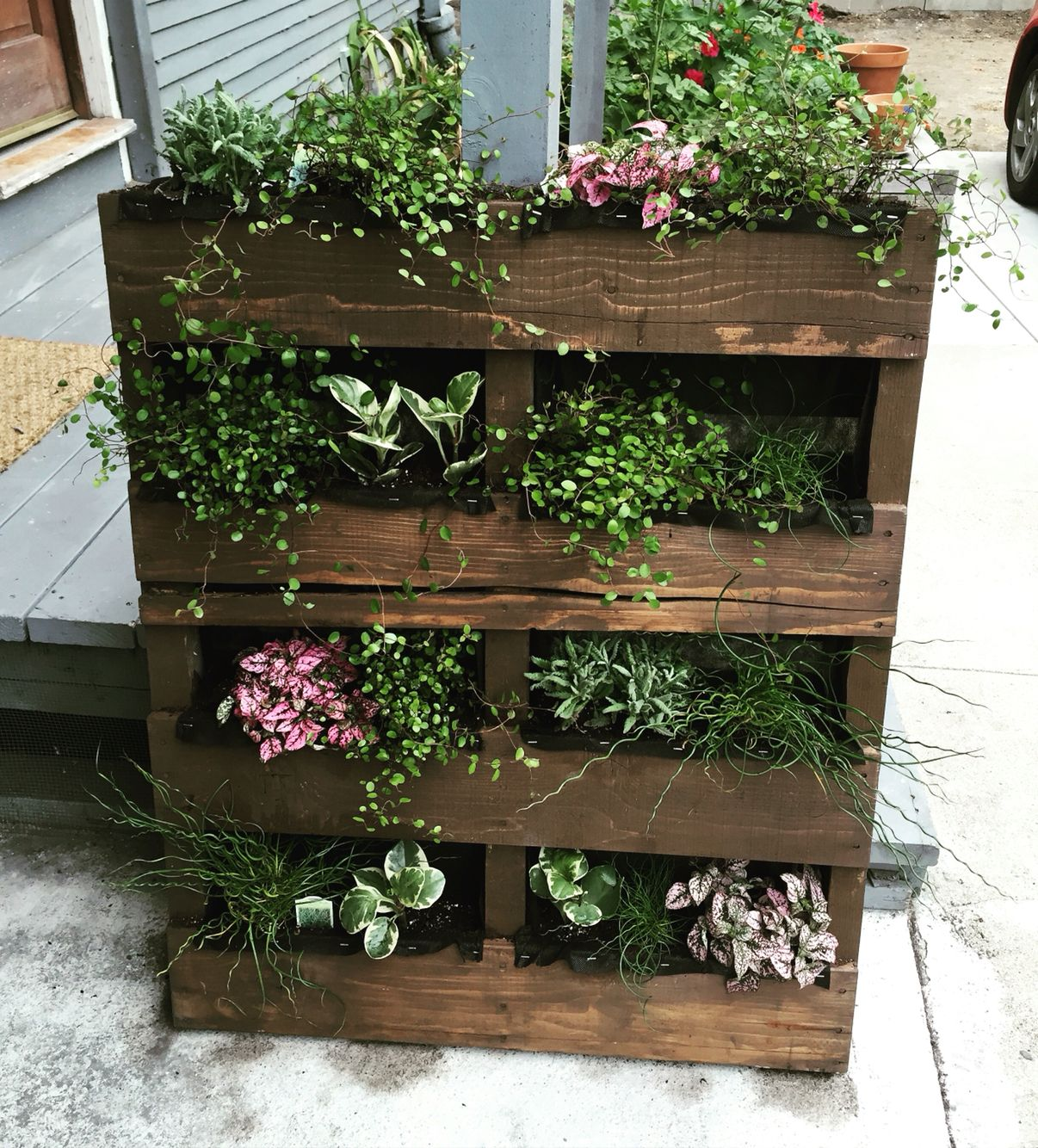 DIY Vertical Garden. Made With A Standard Pallet, Stained