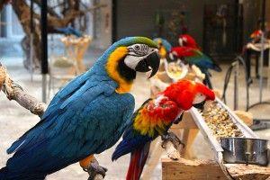 Meet the gang at Zazu's House Bird Sanctuary!