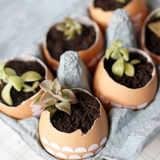 A cute and simple easter gift diy plant up eggshells with tiny a cute and simple easter gift diy plant up eggshells with tiny succulents negle Choice Image
