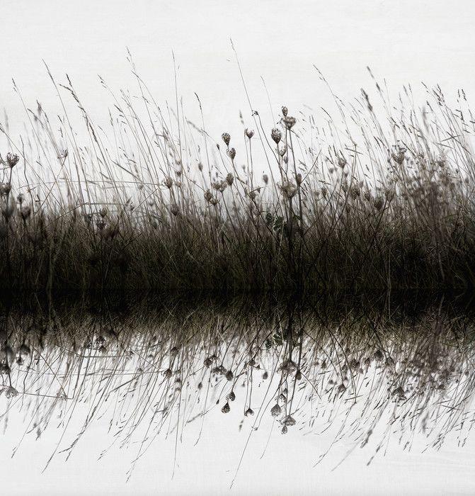 Water Reflection Wildflowers - Decoration Murale & Papier Peint Photo - Photowall