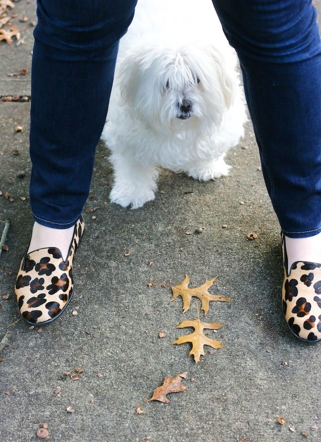 puppy and leopard flats <3