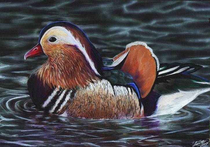 Mandarin Duck by MorRokko on deviantART