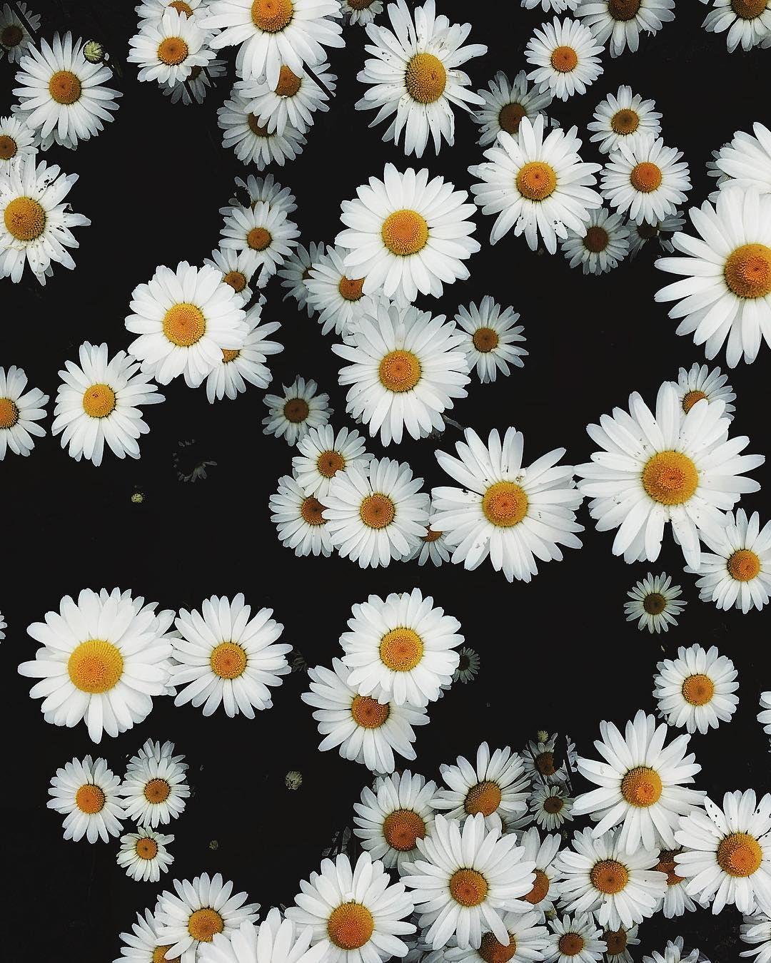 Pin By Georgina Leon On Flowers